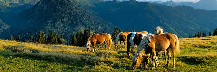 Horses in the mountains near St. Veit